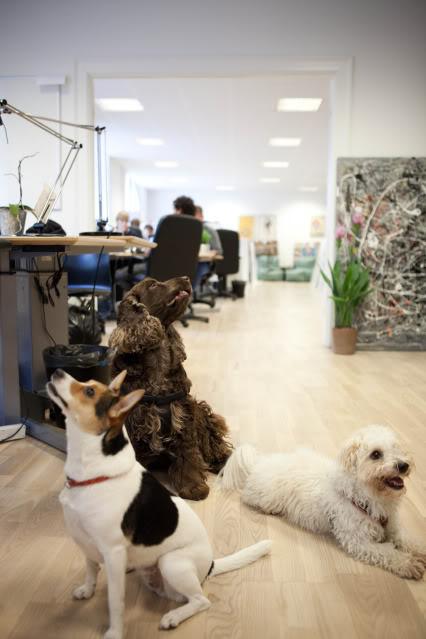 vimedhunddt-11.jpg