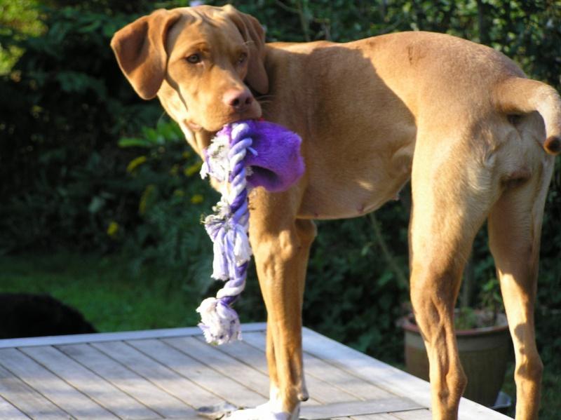 Billeder af hunde 010.jpg