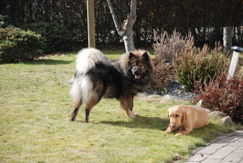 Samu & Marly marts 2010 126.jpg