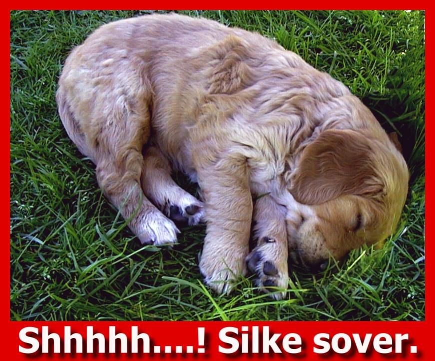 20020518 -Silke sover 5b..jpg