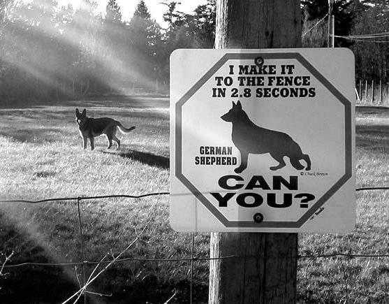 animal-jokes-german-shepherd-i-can-reach-the-fence1.jpg