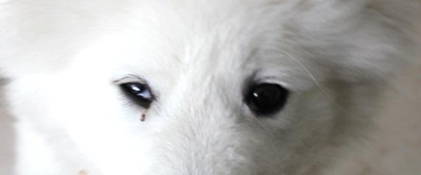 blinkhindefremfald hund