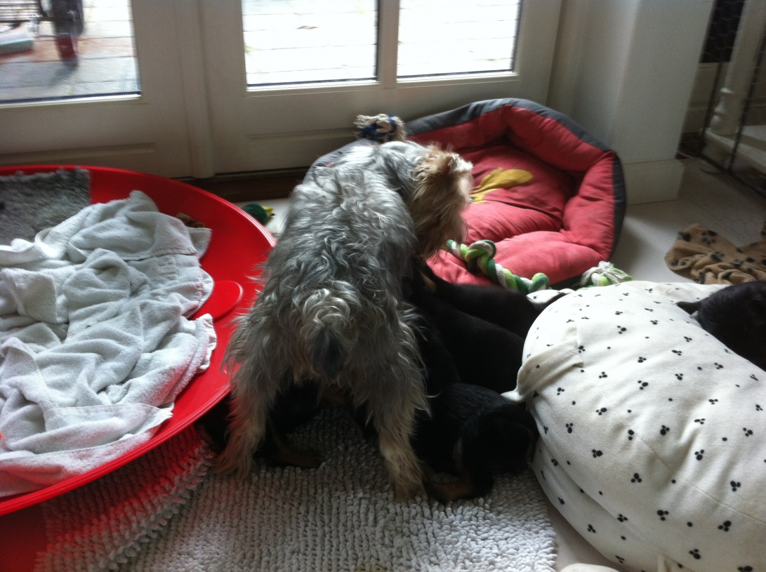 Coco stjæler babyernes guf.jpg