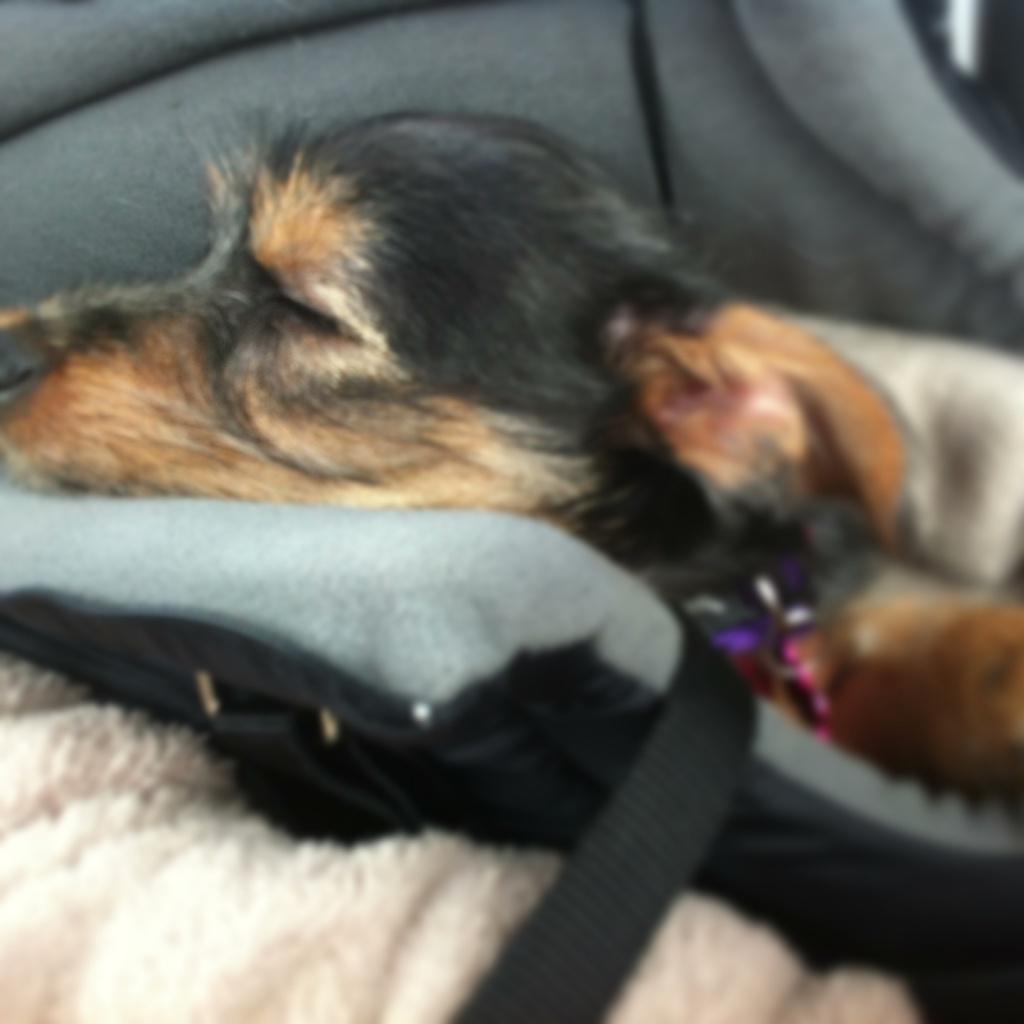 Lily 13 uger dygtig til at køre bil.jpg