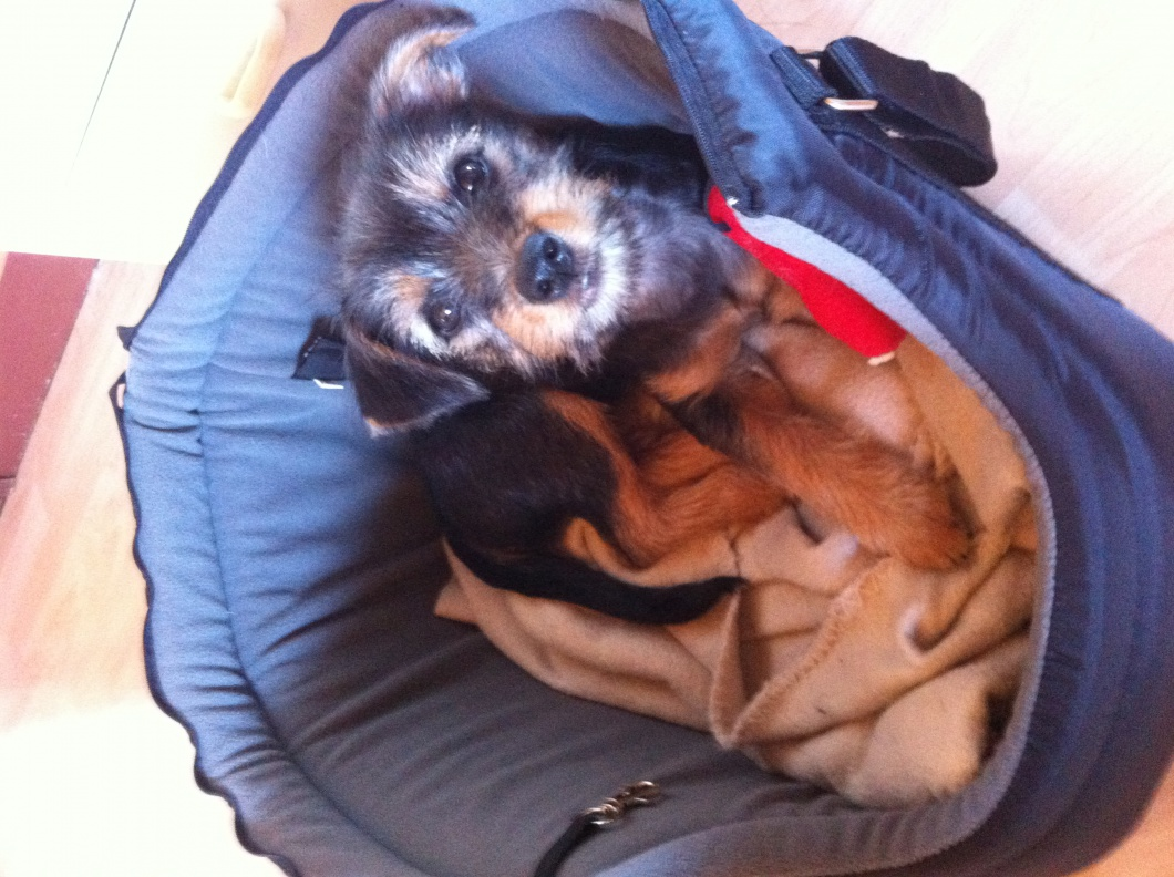 Lily 13 uger elsker sin taske.jpg