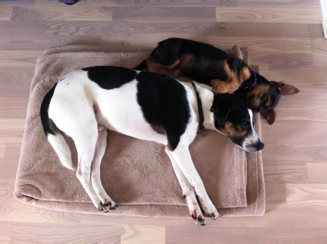 Lily og Futte putter 12 uger.jpg
