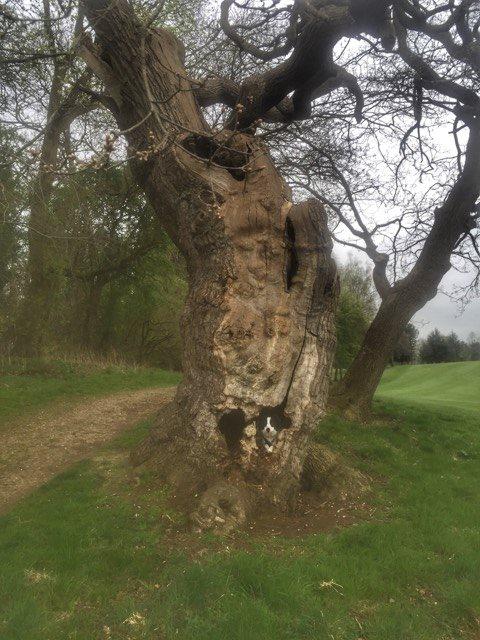 dexter tree dog.jpg