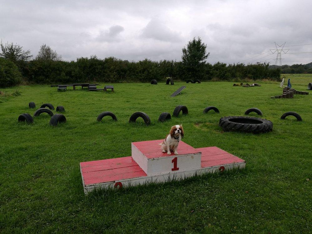 Bessie på hundelegeplads.jpg