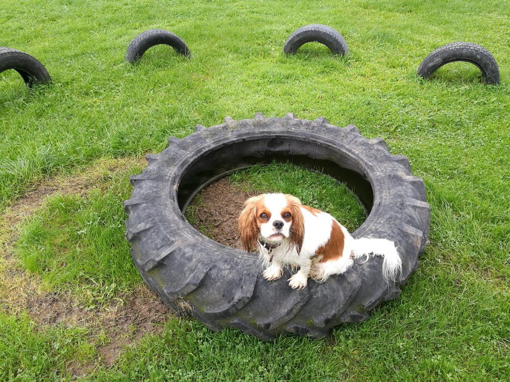 Bessie på traktor dæk.jpg